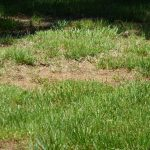 Does my Lawn Need Special Care?