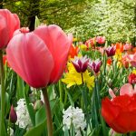 What to Do in the Garden in Spring